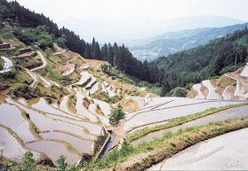 「日本の棚田百選」に認定された「泉谷の棚田」