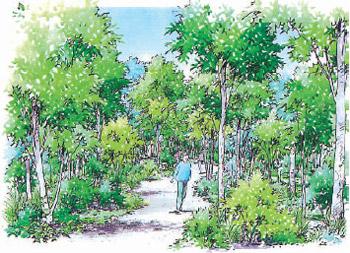 「共生の森」の将来イメージ(大阪府提供)