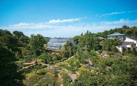 画像:高知県牧野植物園