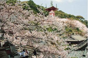 満開の桜の中の瑜祇塔