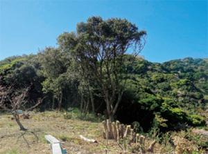 画像:藤原純友が砦を築いたと言われている「城が森」