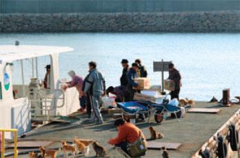 画像:船員から荷物を受け取る島の人たちと出迎える猫たち