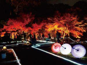 毎年11月に行われるライトアップイベント